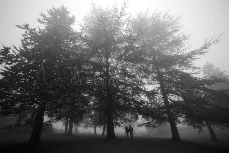 Houdend van paar op een achtergrond van mistig bos stock foto