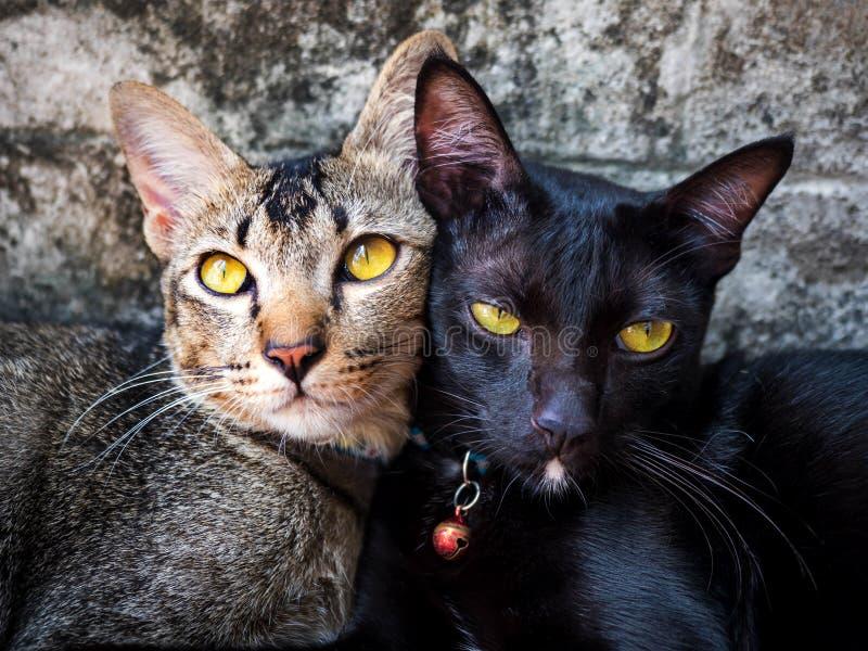 Houdende van kat royalty-vrije stock fotografie