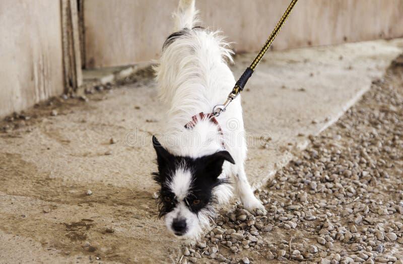 Hound dog street. In adoption, animals an love royalty free stock photo