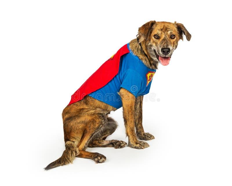 Hound Dog Wearing Superhero Costume. Happy and friendly hound dog sitting to side on white wearing super hero Halloween Costume stock image