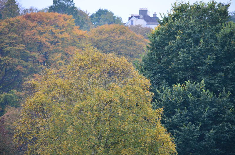 House amongst trees royalty free stock photo