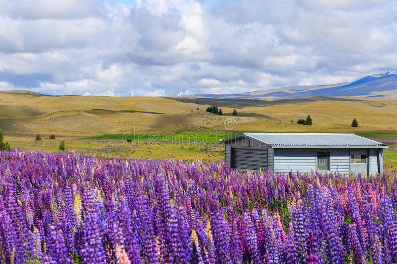 House behind flower field royalty free stock photos