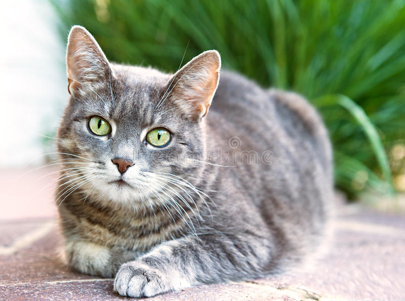 Download House cat stock photo. Image of outdoor, pose, green - 20303048