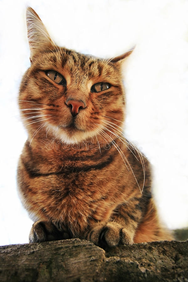 Download House Cat Stock Photo - Image: 25009730