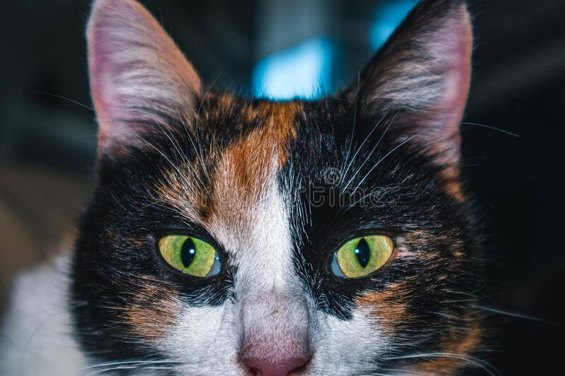 House cat with green eyes. Cuddly cat for humans stock photography