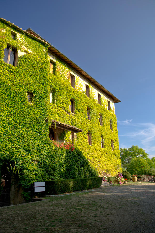 House covered with ivy royalty free stock image