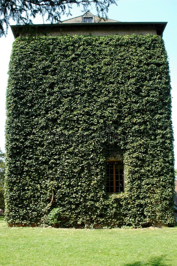 House facade, overgrown with ivy stock photo