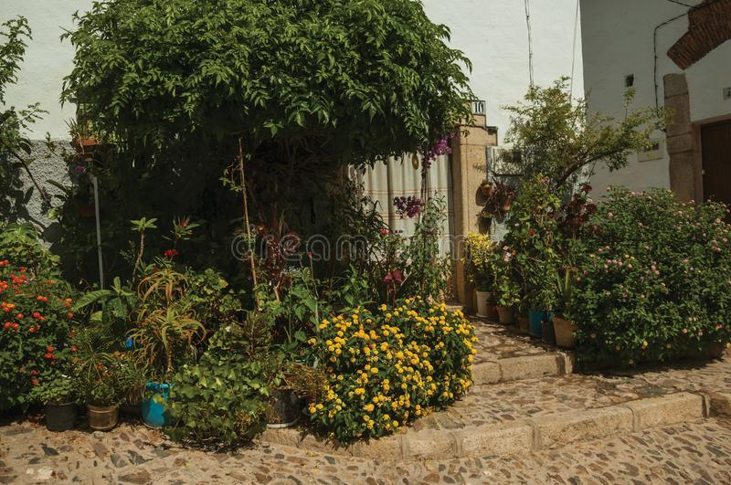 House facade with white walls, stairs, flower pots and plants at Caceres. House facade with white walls, stairs, flower pots and plants in front of cobblestone stock photos
