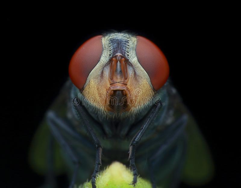 The house fly in the dark royalty free stock photo