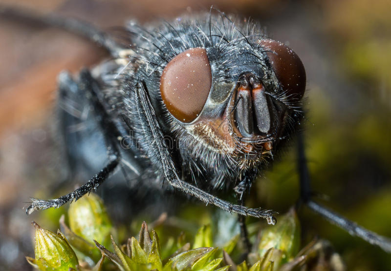 House Fly extreme close up macro. Micro royalty free stock images