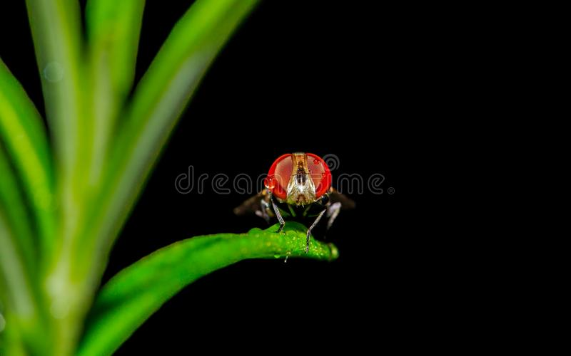 Hiding in the grass royalty free stock image