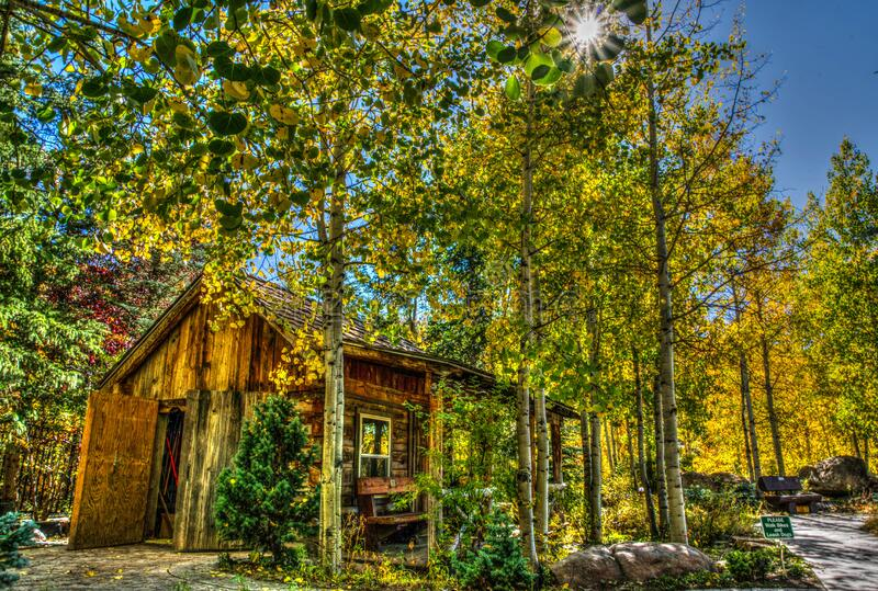 House in forest stock photo