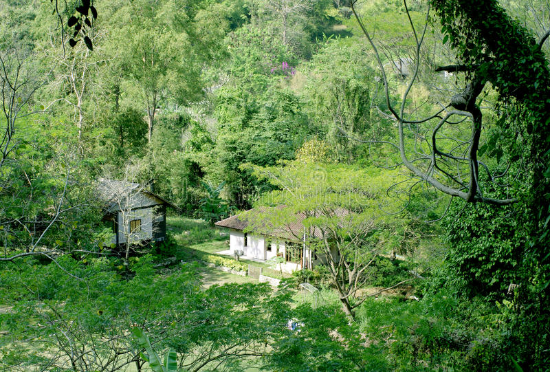 Download House in the green forest stock photo. Image of small - 29378206