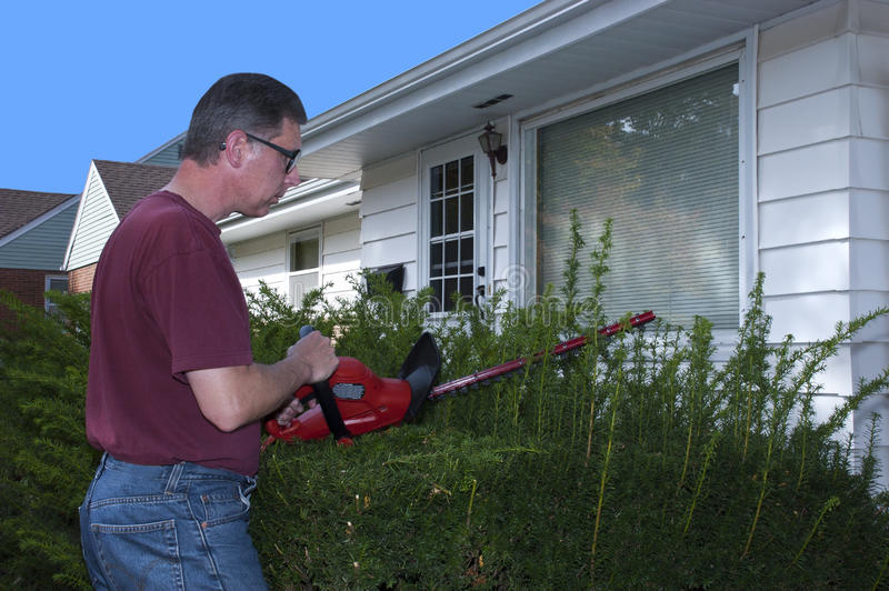 House Home Maintenance Repair Trim Hedges Shrubs. Man doing house and home repairs and maintenance. Here he is trimming the hedges, bushes, and shrubs with an royalty free stock photo