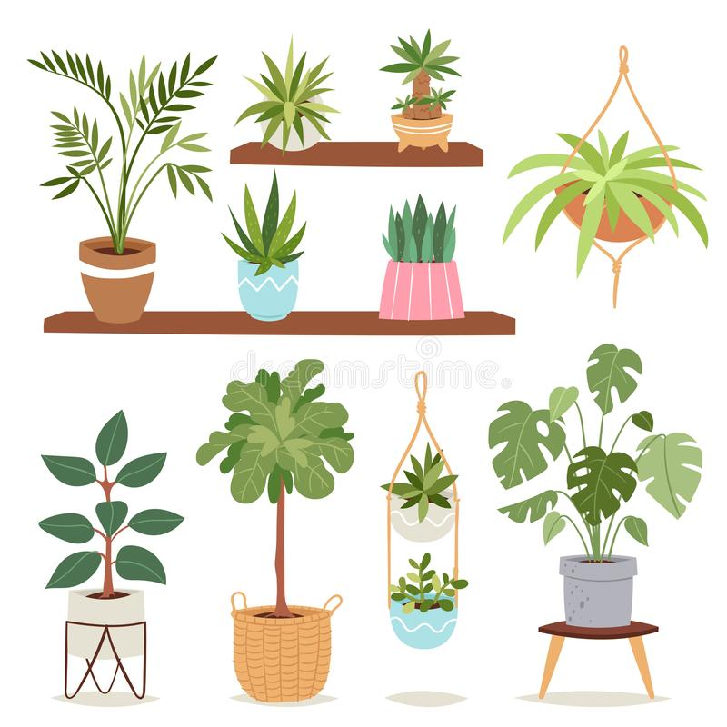 Download House Indoor Plants And Nature Flowers Interior Decoration  Houseplant Natural Tree Flowerpot Vector Illustration.