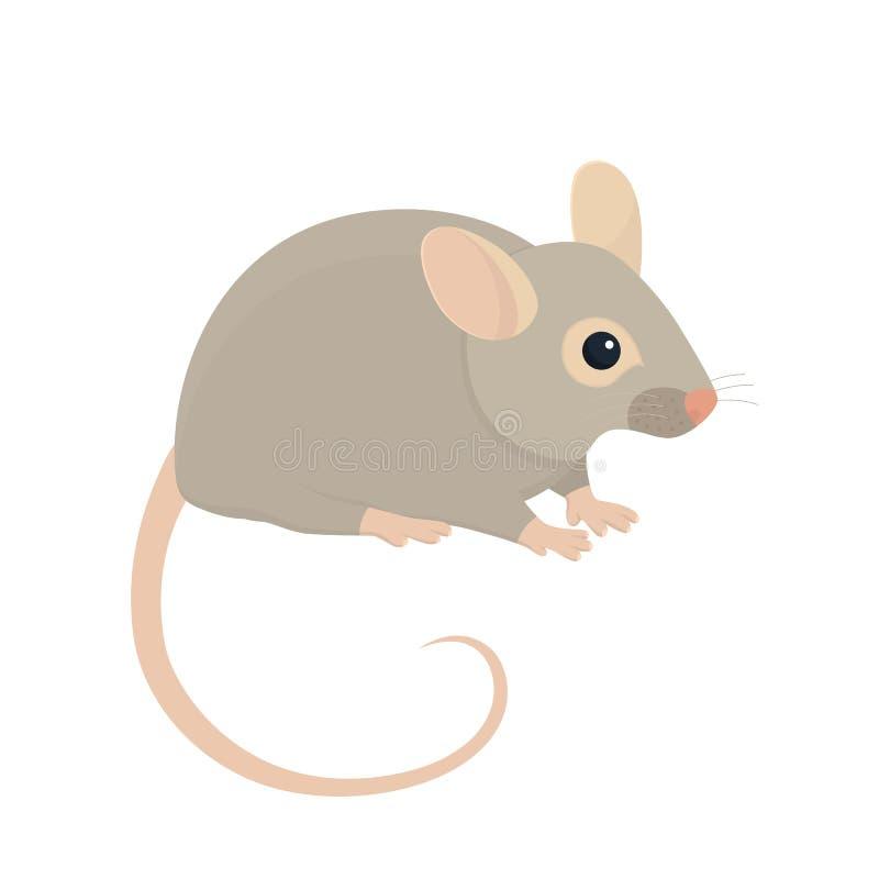 House Mouse. Illustration Isolated on White Background