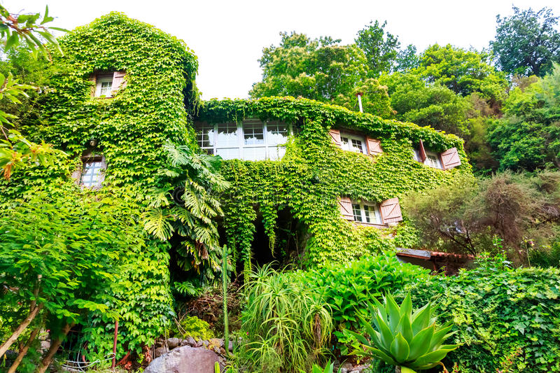 House overgrown with ivy stock photography