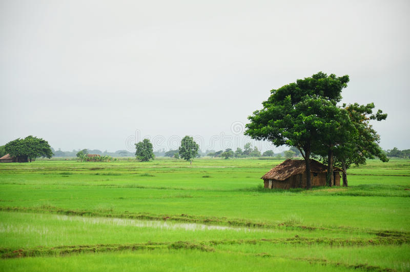 House on paddy field located in Bago, Myanmar. Burmese people waiting train and selling product at railway station in Bago, Myanmar. Bago formerly Pegu, is a stock images