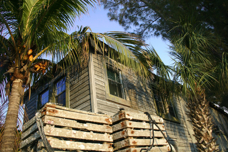 Download House and palm trees stock image. Image of exterior, wood - 1101383
