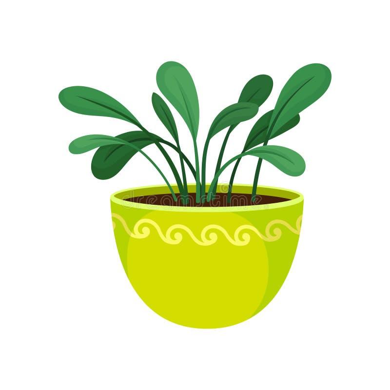 House plant in flowerpot on white background. vector illustration