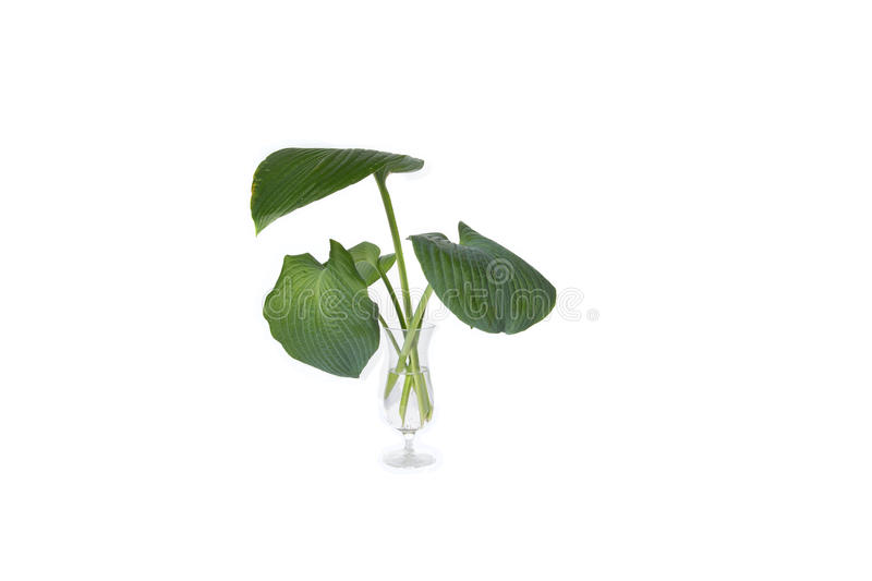 House Plant in glass, plant isolated on white royalty free stock photos
