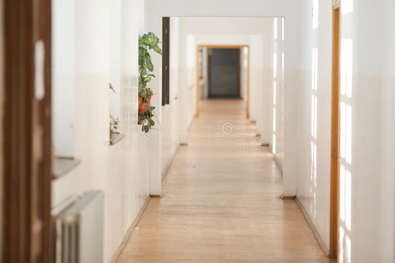 House plant inside a long empty hallway, in an old building with white freshly painted walls and parquet floors royalty free stock photos