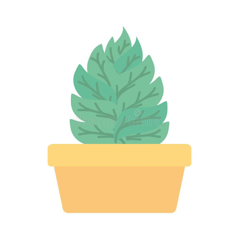 House plant in square ceramic pot. Vector illustration design vector illustration