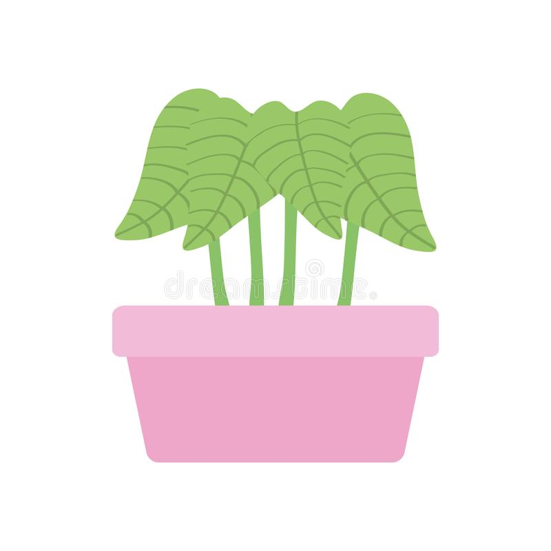 House plant in square ceramic pot. Vector illustration design stock illustration