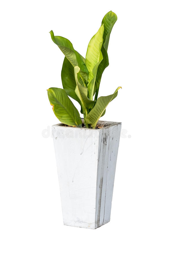 House plants in cement pot isolate on white background. House plants in cement pot on white background royalty free stock image