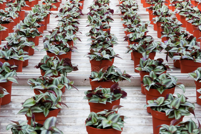 Download House plants in greenhouse stock image. Image of interior - 16046155