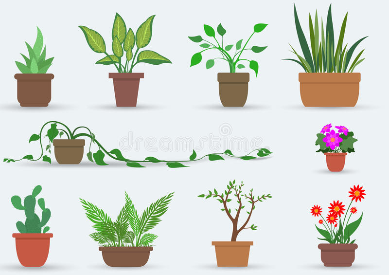 House Plants. Illustration Set of indoor plants in pots, Vector stock illustration