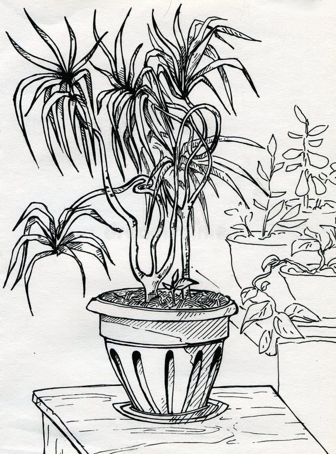 House plants stock illustration. Illustration of ...