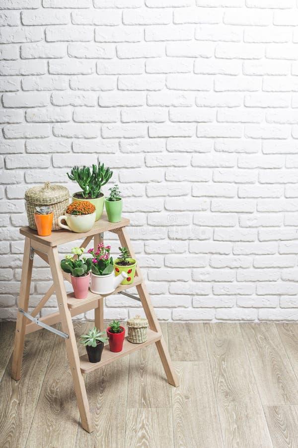 House plants, succulents stock photos