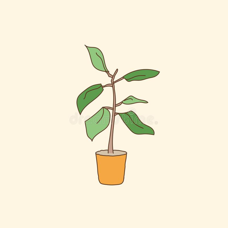 House potted plant. Hand draw. Vector illustration. royalty free illustration