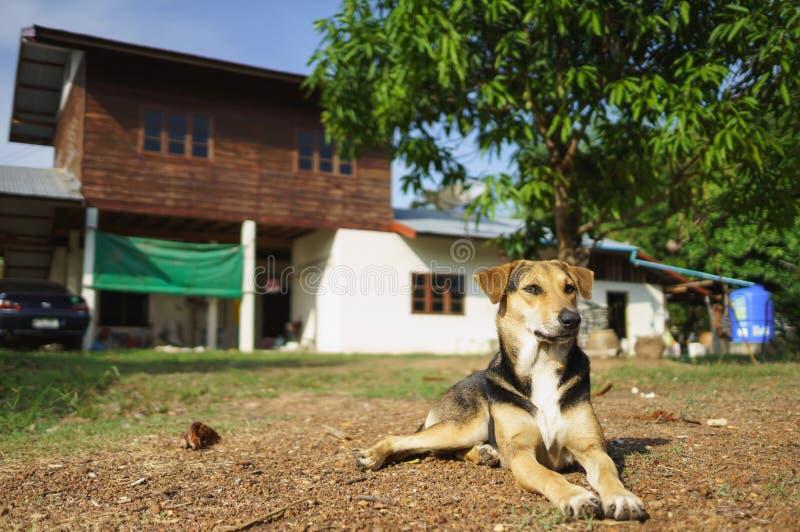 House protecting dog royalty free stock image