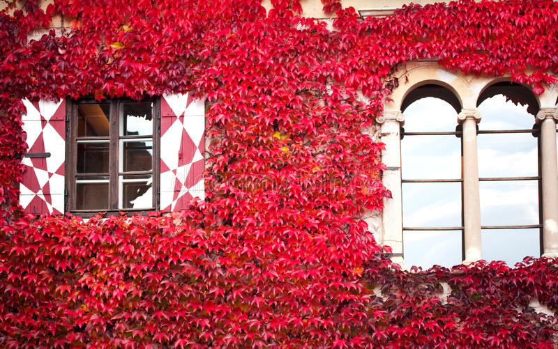 House with red ivy
