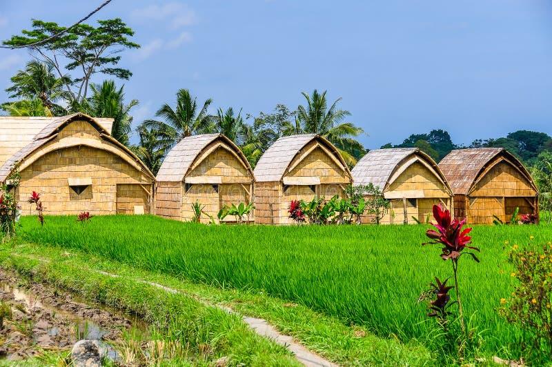 House in rice field in Ubud, Bali stock image