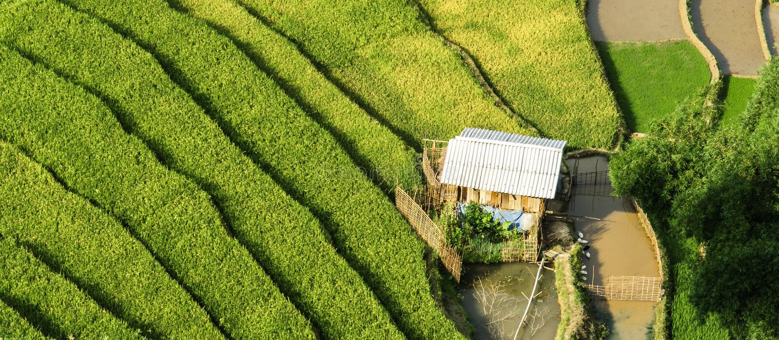 A house on Rice Terraces in Vietnam. This photo was taken in June at Northwest of Vietnam. This region is considered one of the most important granaries of the stock photo