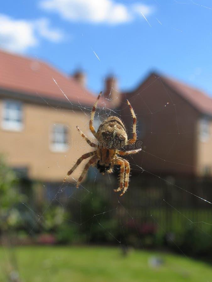 Free House Spider (suburban Setting) Stock Photography - 637792