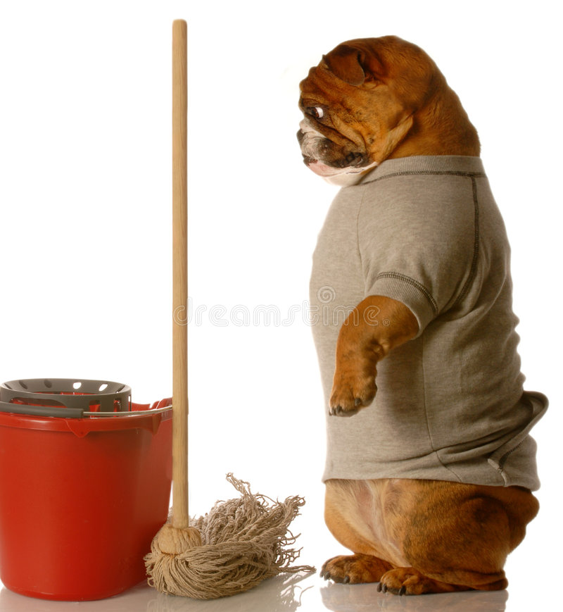 Download House training a dog stock photo. Image of coveralls, brindle - 7454078
