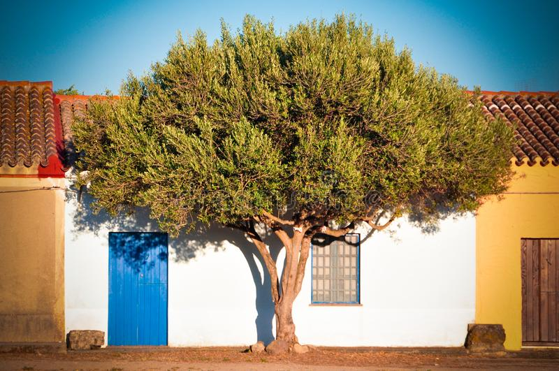 House and tree royalty free stock photography
