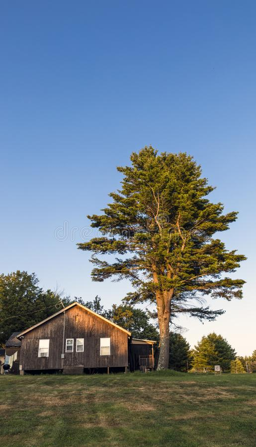 House and tree. Wooden house and tree under golden hour sunlight against blue sky on the hot summer day royalty free stock images