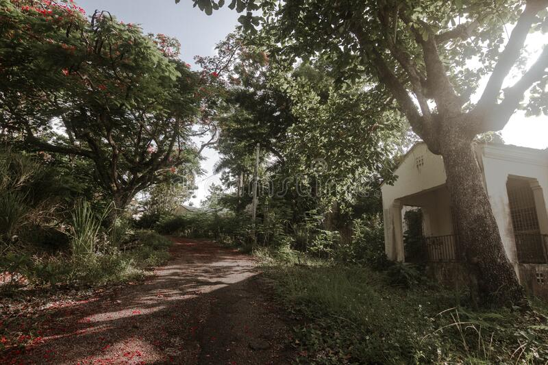 A house among trees and road. An old house among trees and a path full of flowers in Puerto Rico stock images
