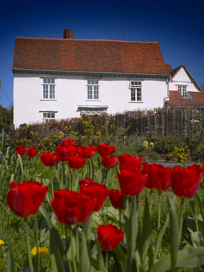 House and Tulips royalty free stock image
