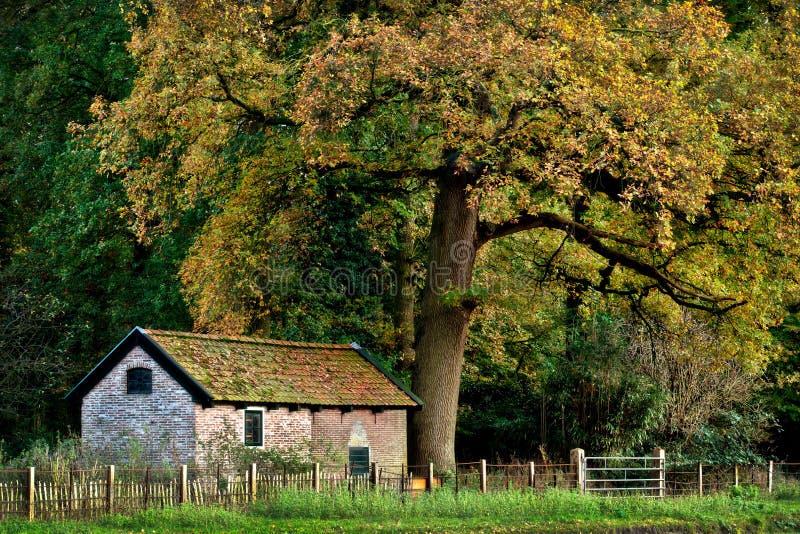 Download House Under A Big Tree stock photo. Image of dorp, boekesteyn - 39111750