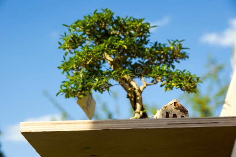 House under bonsai royalty free stock images