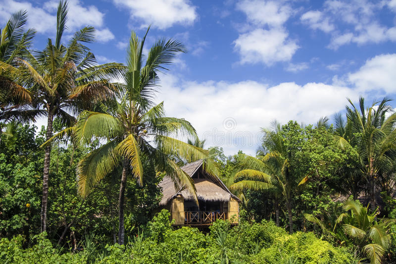 Download House under the palms stock photo. Image of paradise - 34386516
