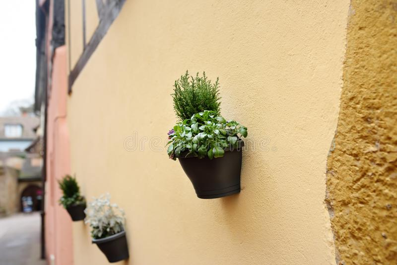 House wall in a medieval city decorated with flower pots with natural plants royalty free stock image