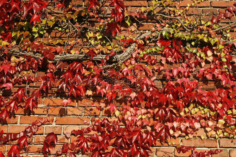 Download House with wine in autumn stock image. Image of germany - 12828789