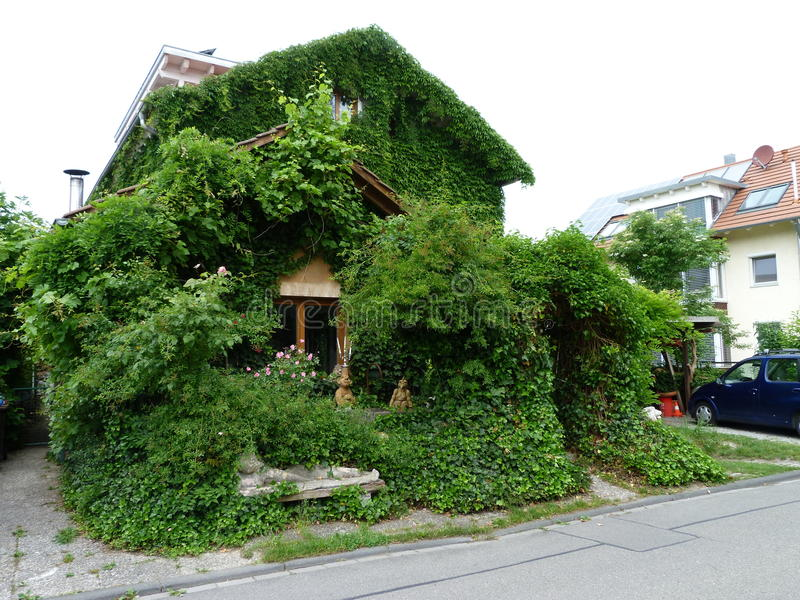 Download House With Wine Leaves And Ivy Editorial Photography - Image: 19965692